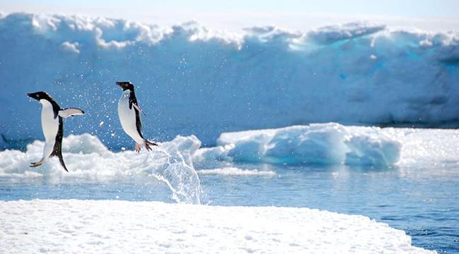 Travels to Antarctica & Africa