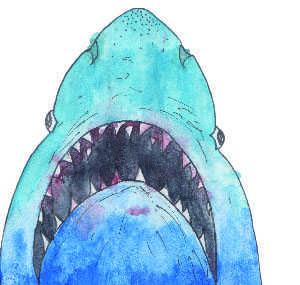 Sharks on Acid