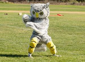 Undefeated Laguna Blanca Owls Soars Past Nordhoff Rangers